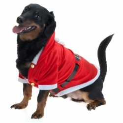 Kerst outfit carnaval honden
